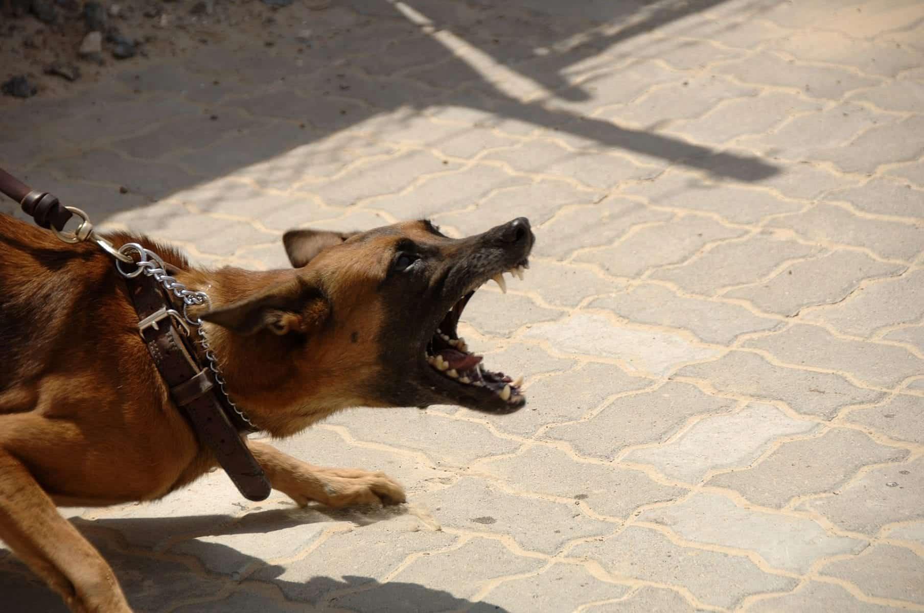 dog bite injury lawyer